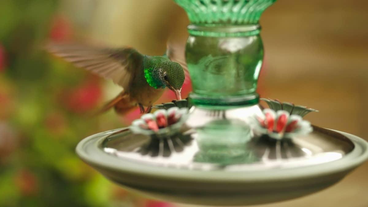 The 5 Best Glass Hummingbird Feeders for Your Garden
